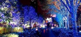 Japan Christmas Illumination